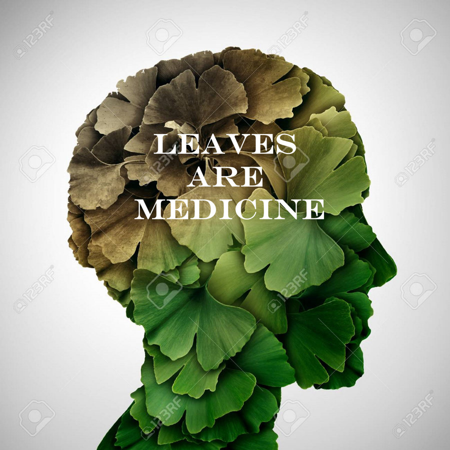 Leaves Are Medicine